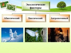Биология 9 класс среда обитания экология