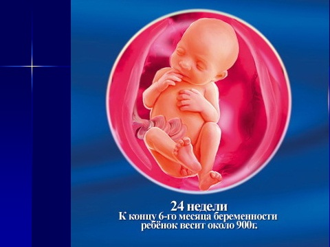человеческий эмбрирон зародышевое развитие