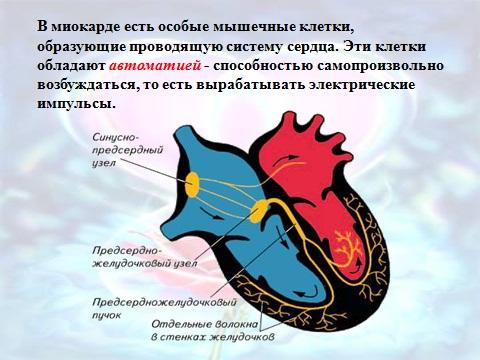 Сердце бьется