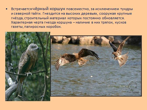 птицы хищники