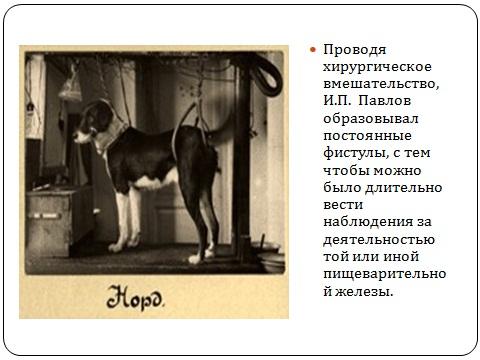 И.П. Павлов - метод фистул