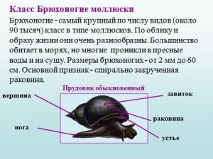 презентация по биологии на тему раковины моллюсков