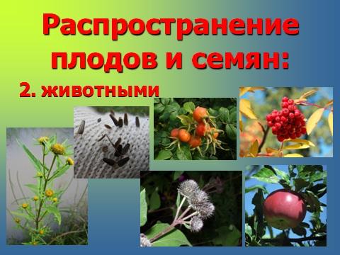 плоды растений