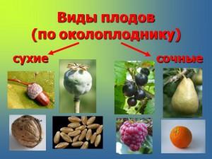 цветок, семена, плоды