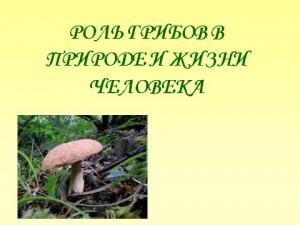 значение грибов