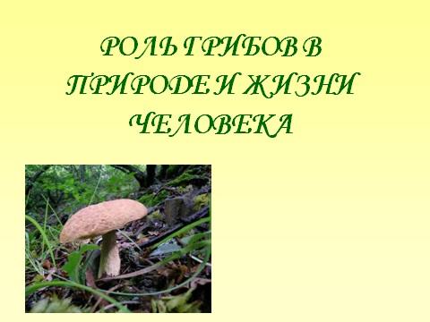 Роль грибов в природе и жизни человека.