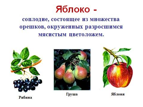 Плоды и их значение