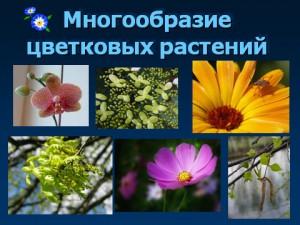 цветковые растения и их виды