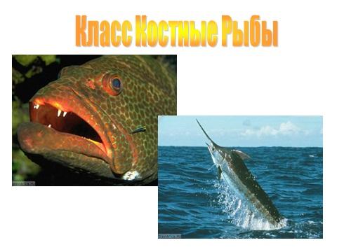 презентация по биологии рыбы