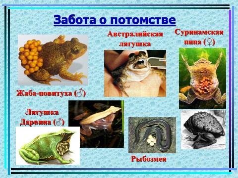 Презентация земноводных