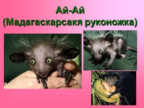 Презентация по биологии на тему Царство животные