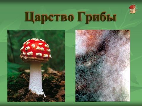 лишанийки и грибы