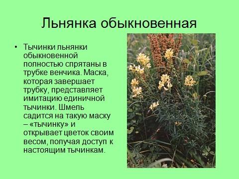 насекомые опылители растений