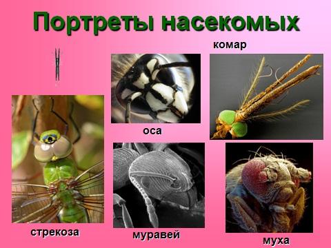 насекомые на Земле