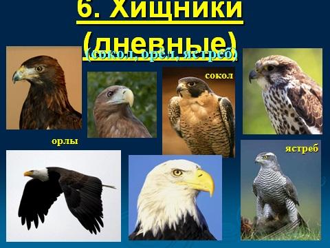 Птицы и их многообразие