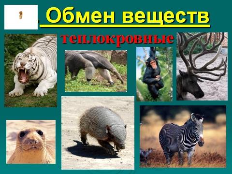 презентация звери