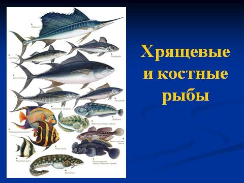 презентация на тему рыбы