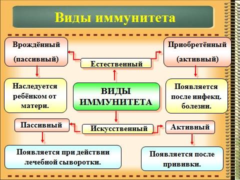 механизм иммунитета