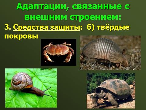 биология 9 класса раздел экология