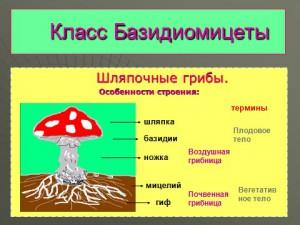 грибы и их многообразие