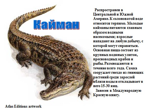пресмыкающиеся крокодилы