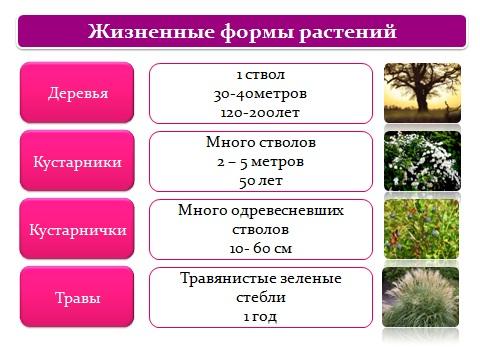 Ботаника наука о растениях