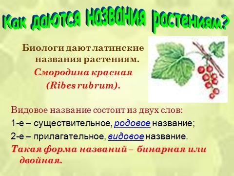 Презентация на тему Систематика растений