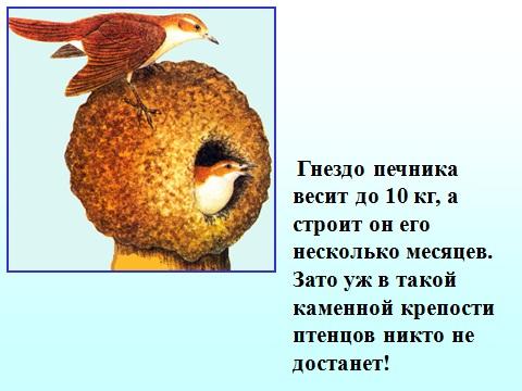 забота птиц о потомстве