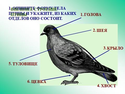 птицы биология презентация powerpoint