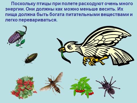 Презентация по биологии птиц