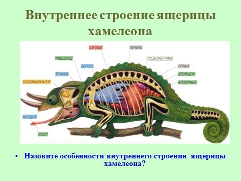 презентация по биологии 7 класса