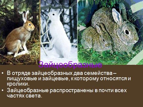 белки, бобры и зайцы