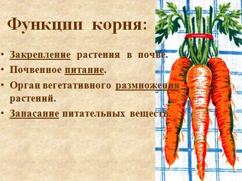 типы и виды разных корней растений