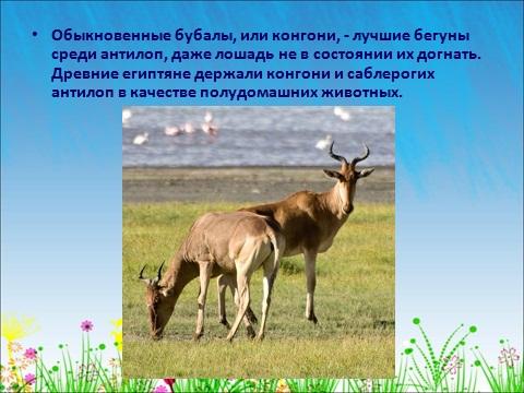 разные олени