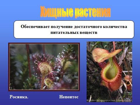 адаптация животных и растений