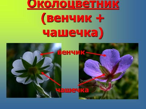 растения размножаются семенами