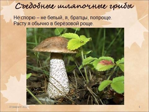 презентация по биологии 6 класса на тему шляпочные грибы