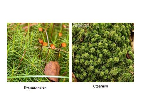 растения и споры