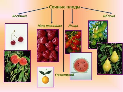 плоды разные семена всякие