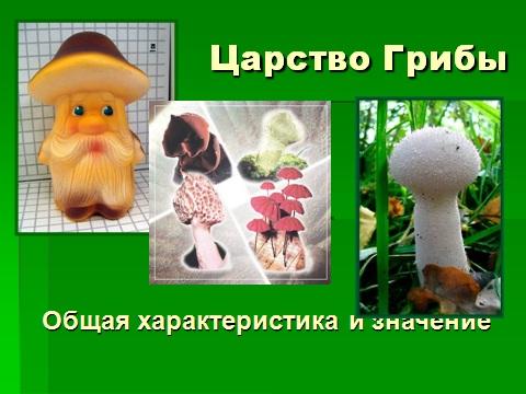 Классификация и значение грибы