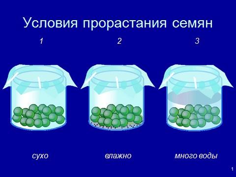 6 Класс Презентация Условия Прорастания Семян