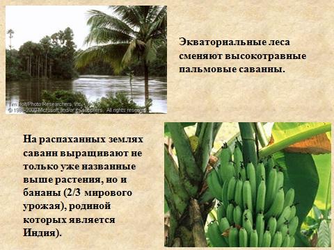 Животные и растения южноамериканского континента