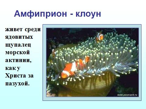 рыбы - приспособление к защите