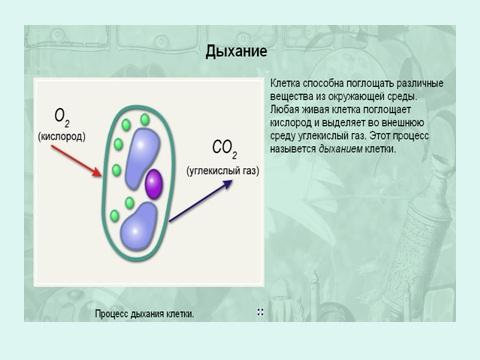 Биология клетки учебник 6 класса