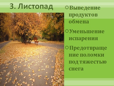 листья растений и их значение