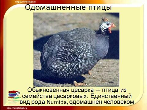 презентация по биологии 7 класс птицы
