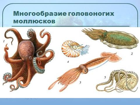 моллюски всякие