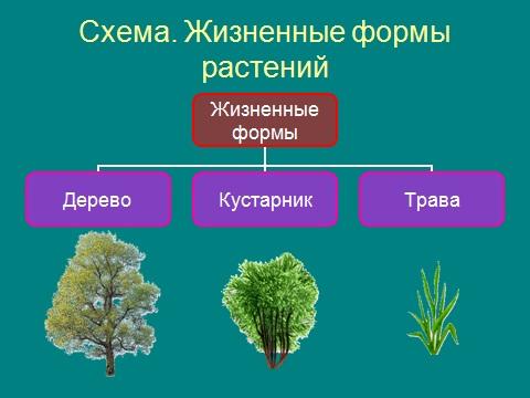о высших растениях