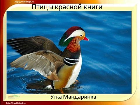 Красная книга охраняемые птицы