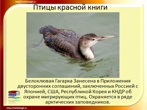 красная книга птиц